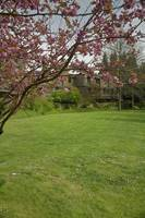 Springtime, the Arbutus Village 2008 16