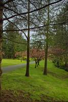 Springtime, the Arbutus Village 2008 14