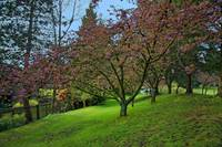 Springtime, the Arbutus Village 2008 12