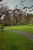 Springtime, the Arbutus Village 2008 15