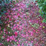 """Carpet of Petals"" by bentensmiling"