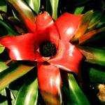 """""""Macro Flower from Reptile Gardens SD"""" by ldm"""