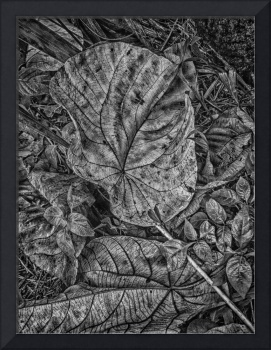 DRY LEAVES in BLACK & WHITE - DEC 2014 by Nawfal Johnson