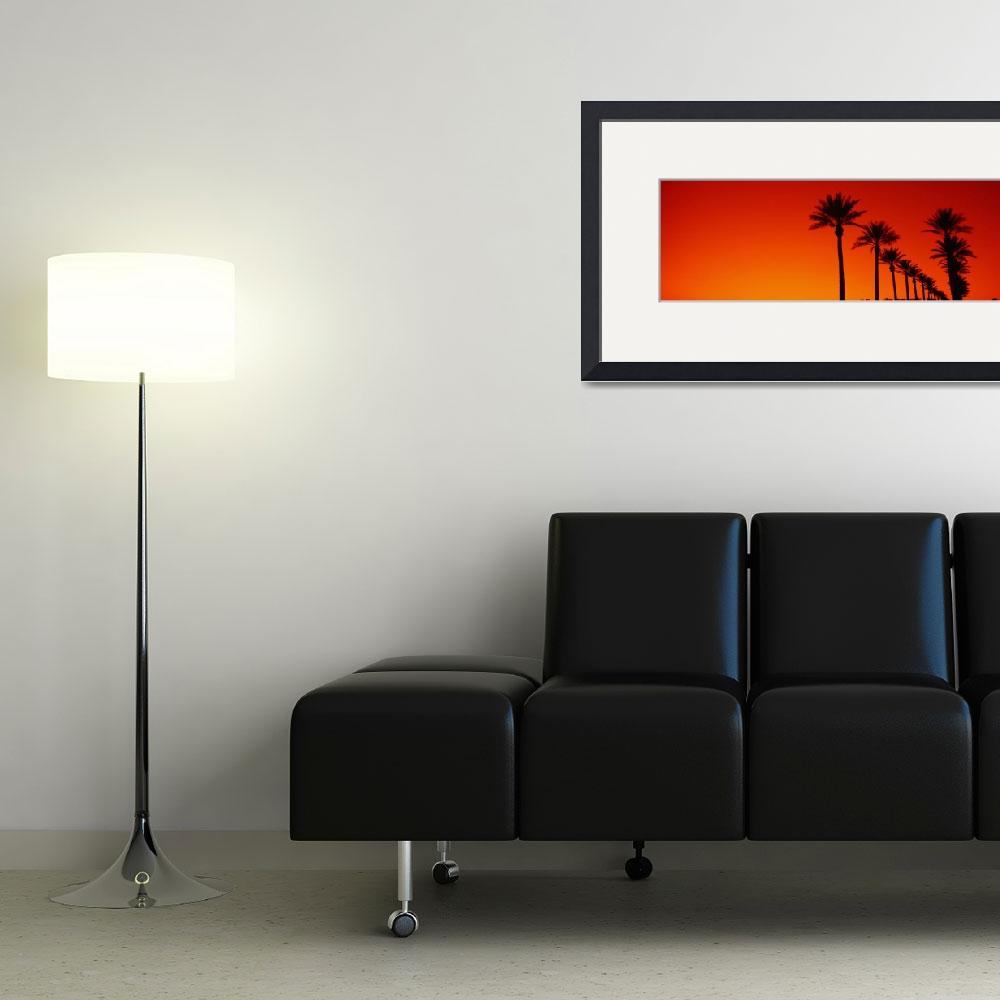 """Date Palm Trees Stand Ready Sunrise  Phoenix AZ&quot  by Panoramic_Images"