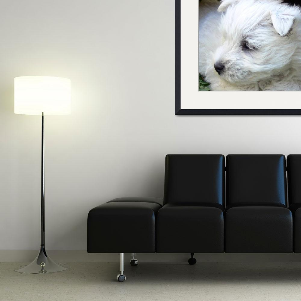 """West Highland White Terrier Puppy&quot  (2008) by Westie"