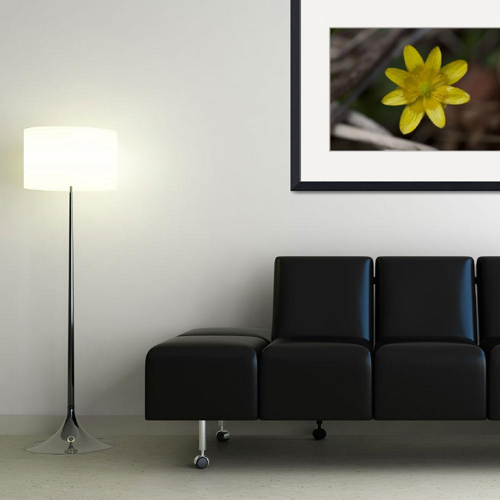"""Yellow Flower&quot  (2011) by jeffgriffin"