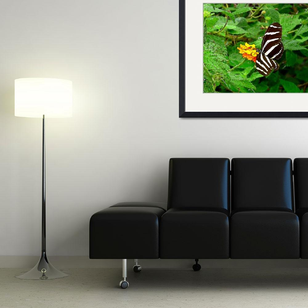 """Amazing Zebra Butterfly&quot  (2010) by Caribbean-Digital-Art"