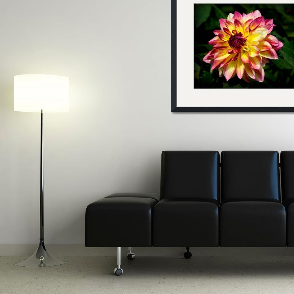 """Dahlia Flower&quot  by jwaldron"