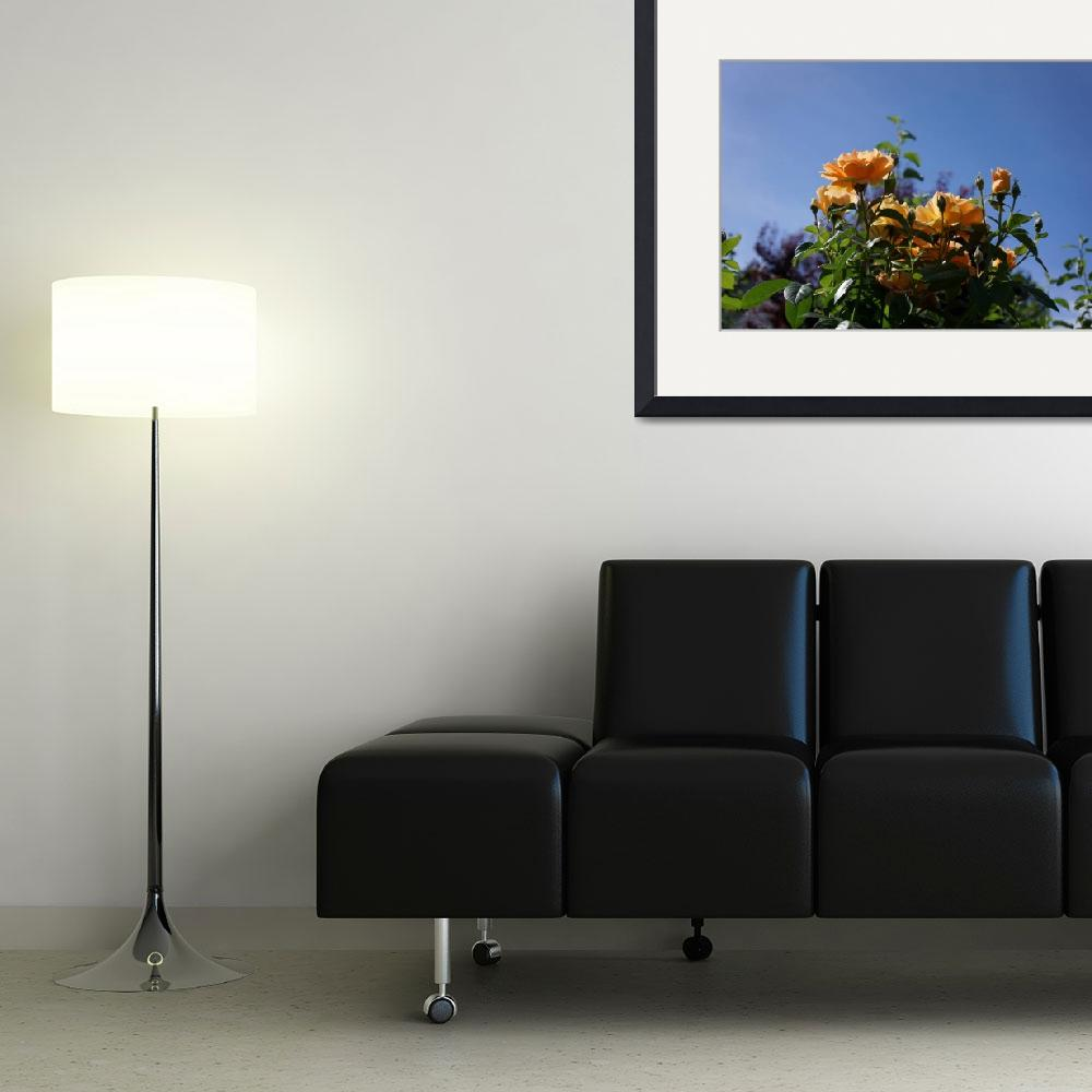 """Rose Garden Art Prints Orange Roses Blue Sky&quot  (2014) by BasleeTroutman"