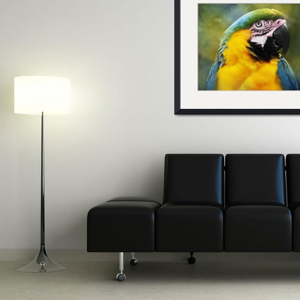 """Blue Macaw Portrait&quot  (2012) by NAR90"