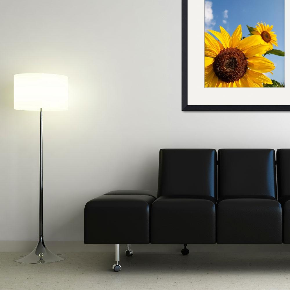 """Sunflowers&quot  (2009) by a2yphotos"