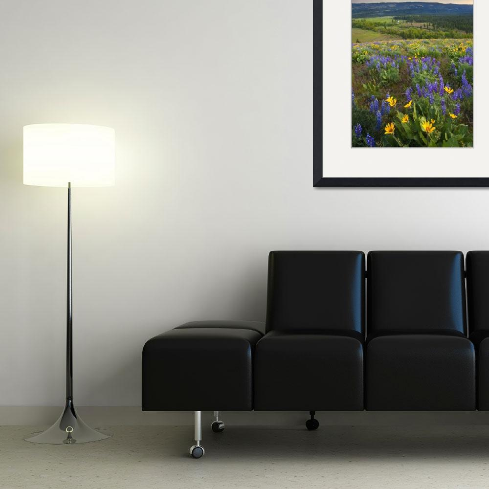 """Wenas Valley Wildflowers&quot  (2009) by Dawsonimages"