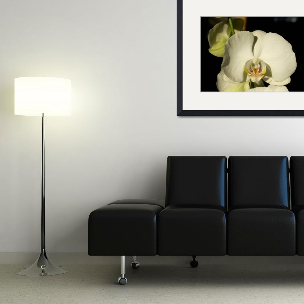 """White Orchid Perfection in Color&quot  (2009) by lorieleighlawrence"