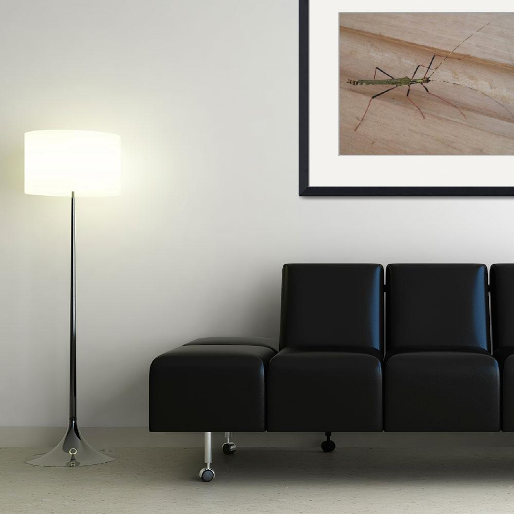 """Large green long legged insect&quot  (2009) by jari"