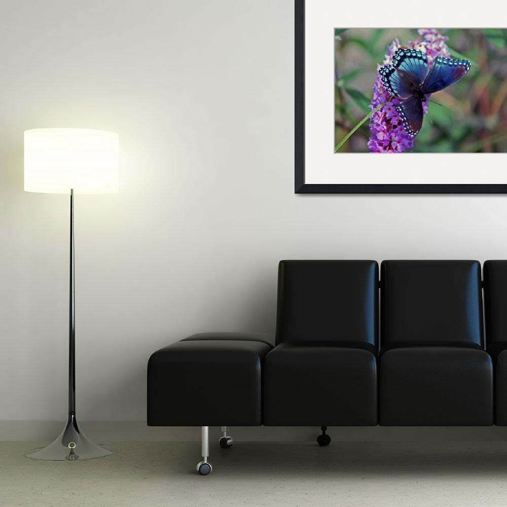 """Butterfly Red-Spotted Purple&quot  (2011) by KsWorldArt"