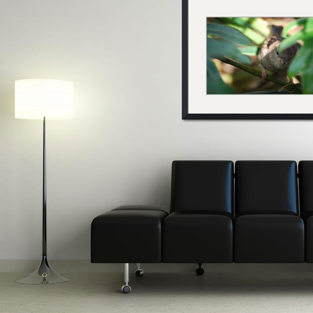 """Bird (12)&quot  by avisualzen"