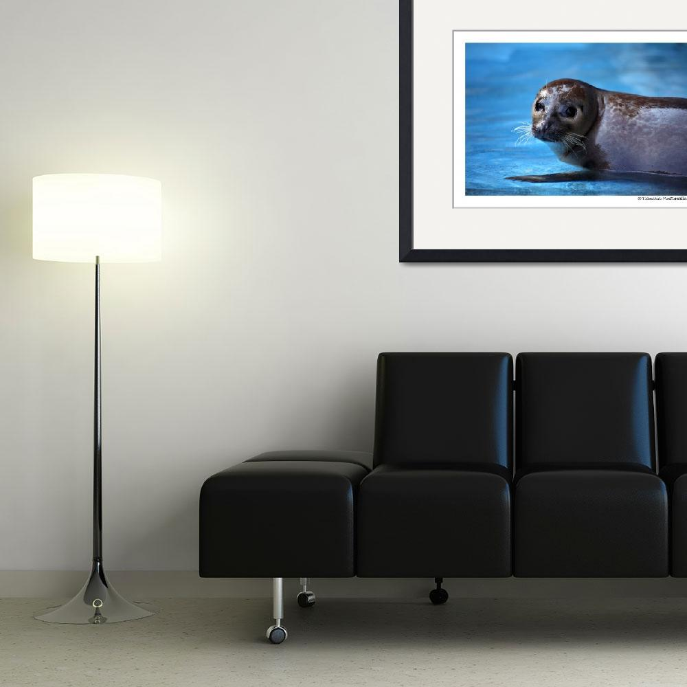 """Harbour Seal&quot  (2010) by WildVisuals"