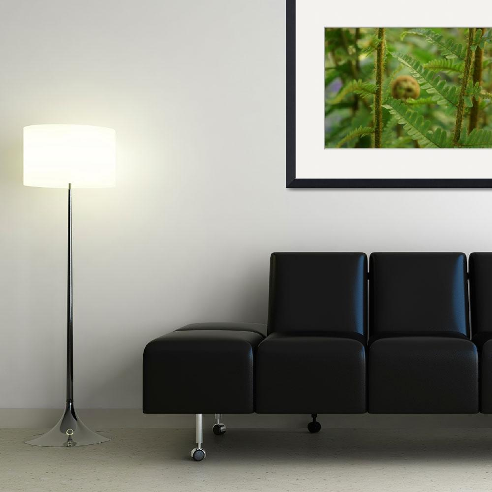 """Fern Frond Curling Green Fern Leaves Art Prints&quot  (2014) by BasleeTroutman"