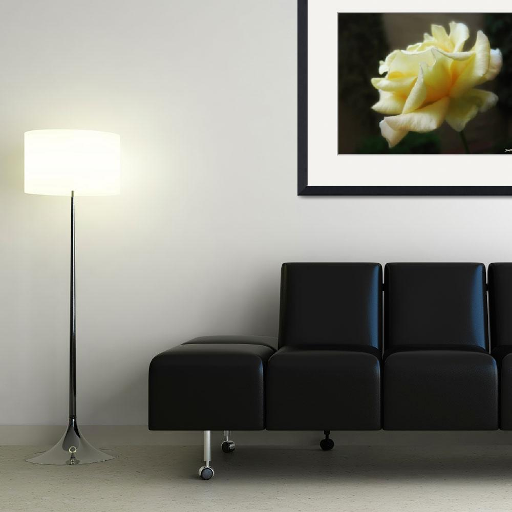 """My First Yellow Rose - The Second Morning 1&quot  (2010) by ChristopherInMexico"