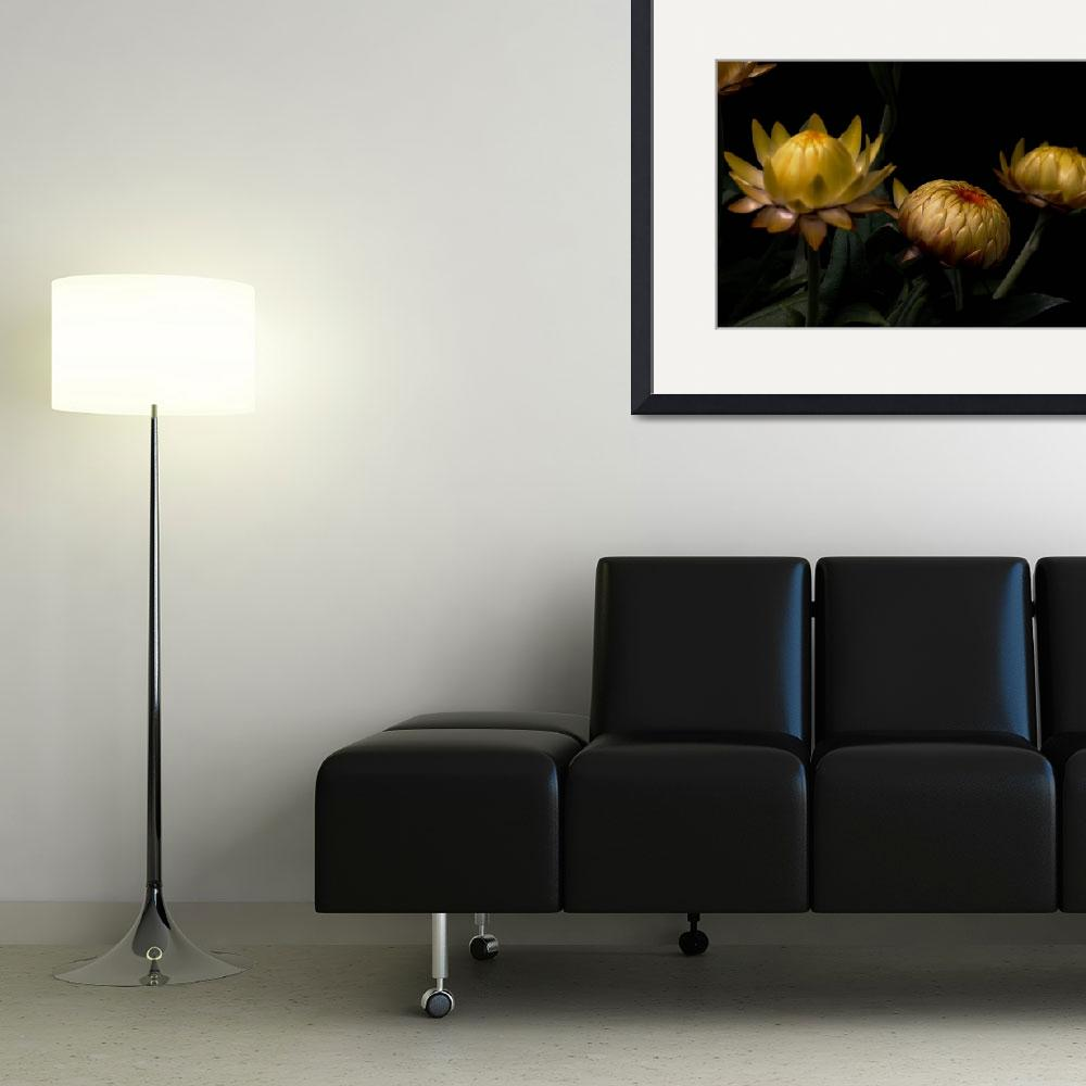 """Yellow Flower Buds&quot  (2013) by bavosiphotoart"