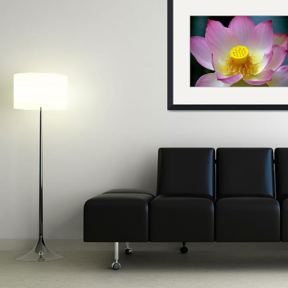 """Lotus&quot  (2009) by Bob_Wall"