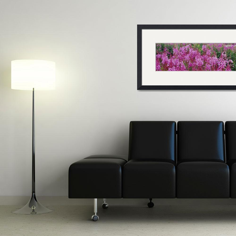 """Fireweed AK&quot  by Panoramic_Images"