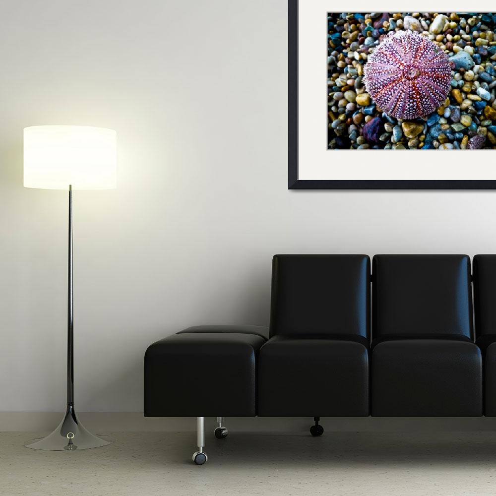 """Sea Urchin on a Pebble Beach&quot  (2010) by derekbeattieimages"