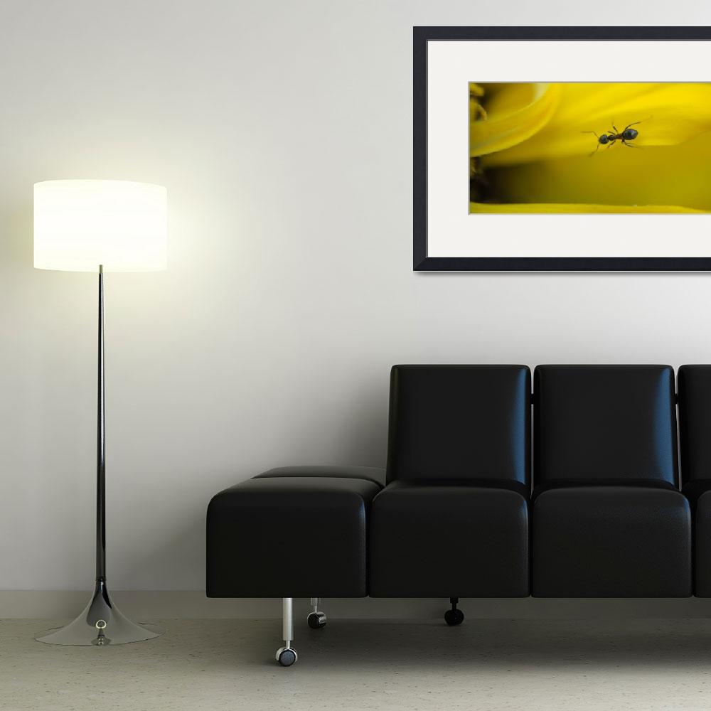 """Ant on yellow road.&quot  (2012) by bluecip"