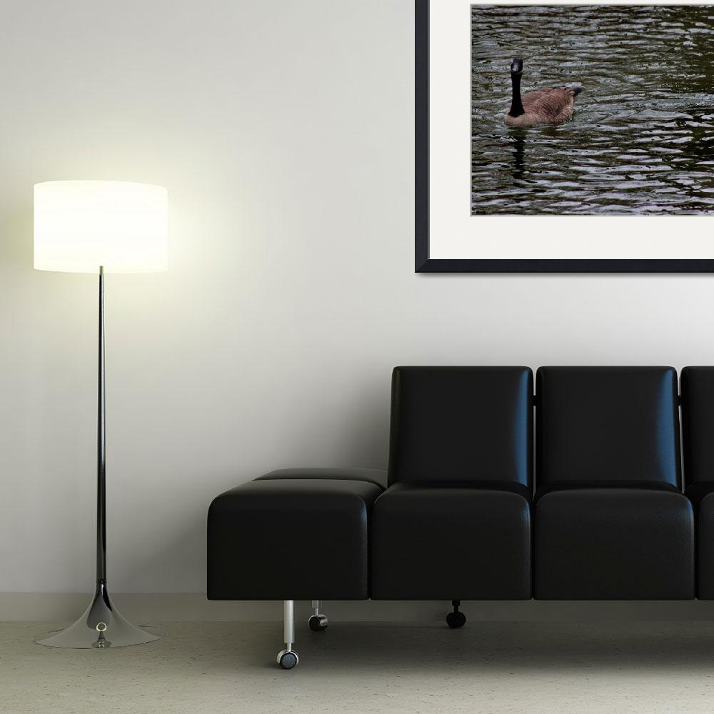"""Canada Goose Wondering About You Number 4 8x10&quot  (2016) by KsWorldArt"
