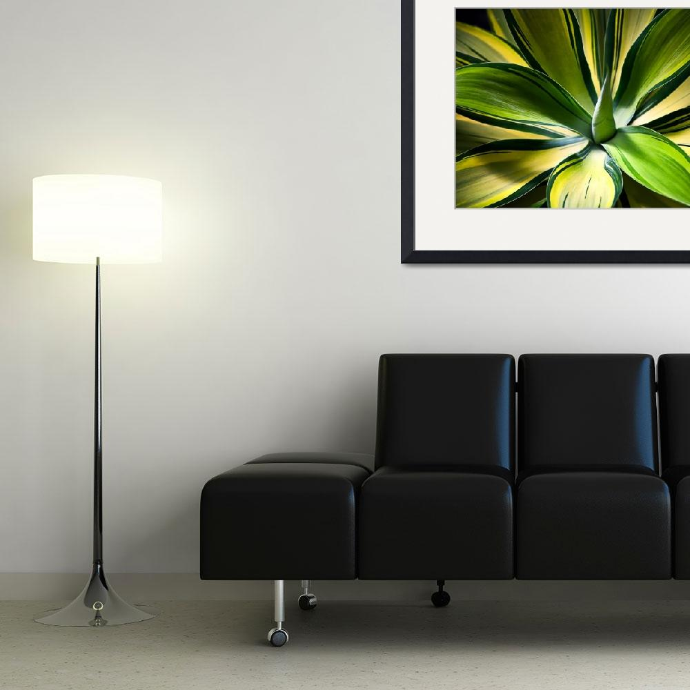 """Variegated Agave&quot  (2010) by johncorney"