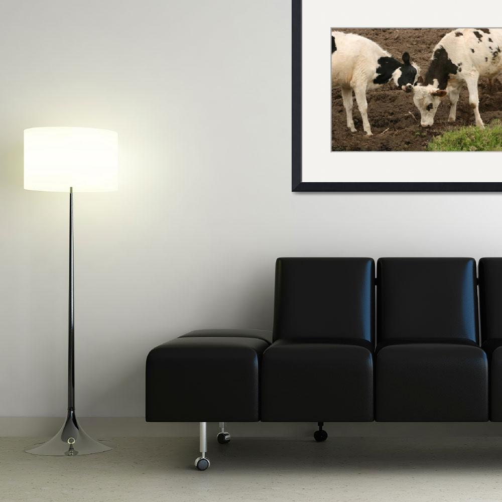 """Young Cow and Bull Pushing&quot  (2012) by rhamm"