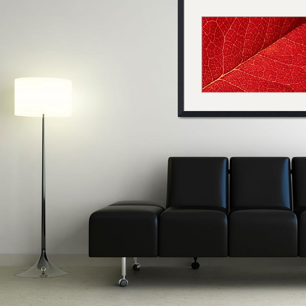 """red leaf abstract&quot  by kalishko"