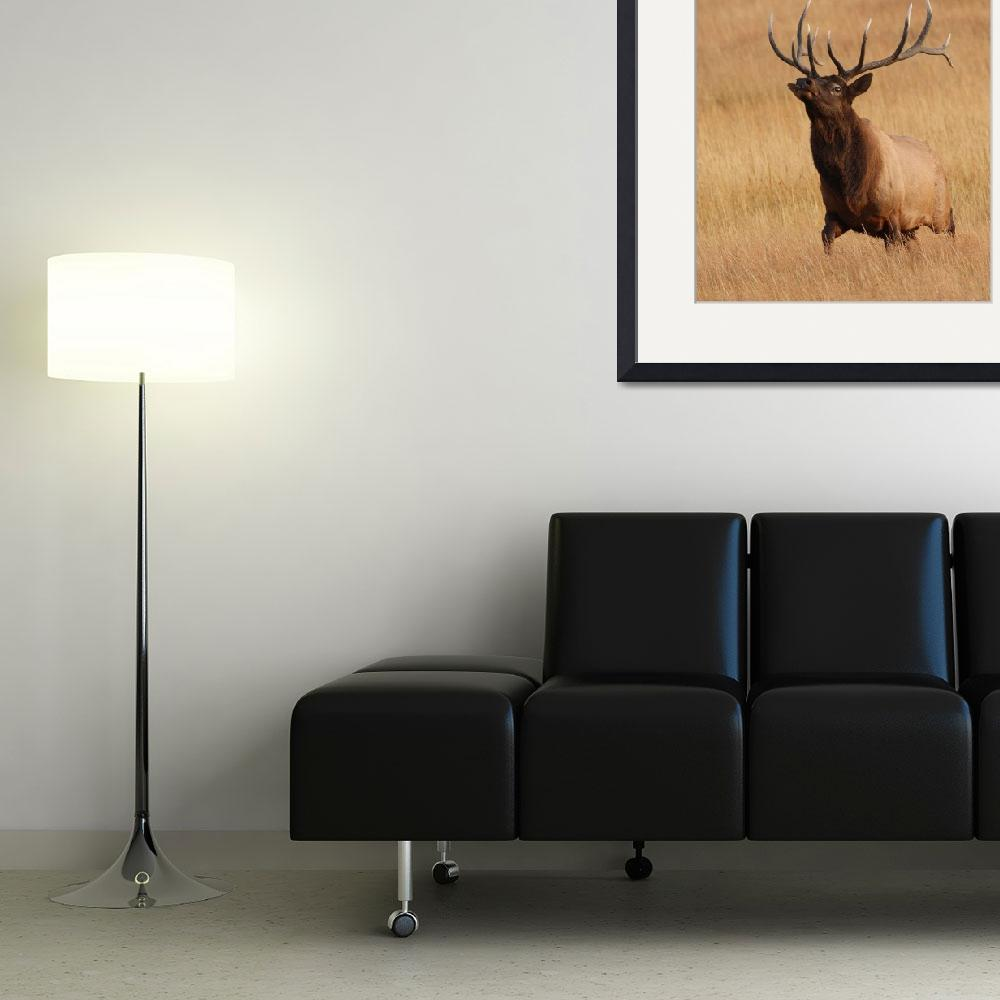 """Bull Elk Charging&quot  by WorldDesign"