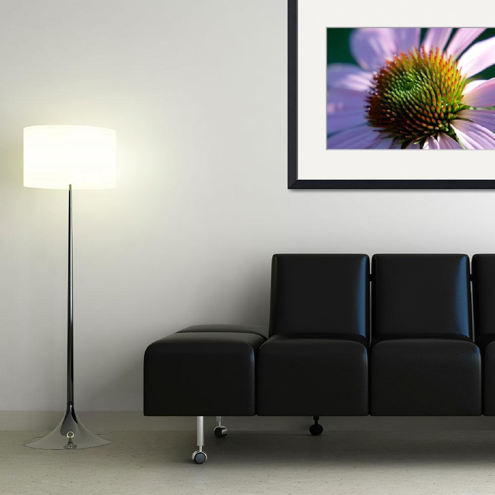 """Cone Flower Center&quot  (2008) by stevenricciphotography"