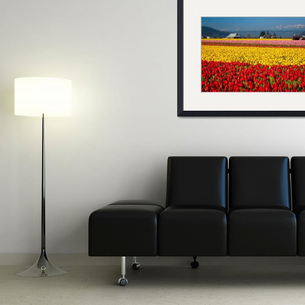 """Tulips and the Olympics&quot  (2011) by Inge-Johnsson"