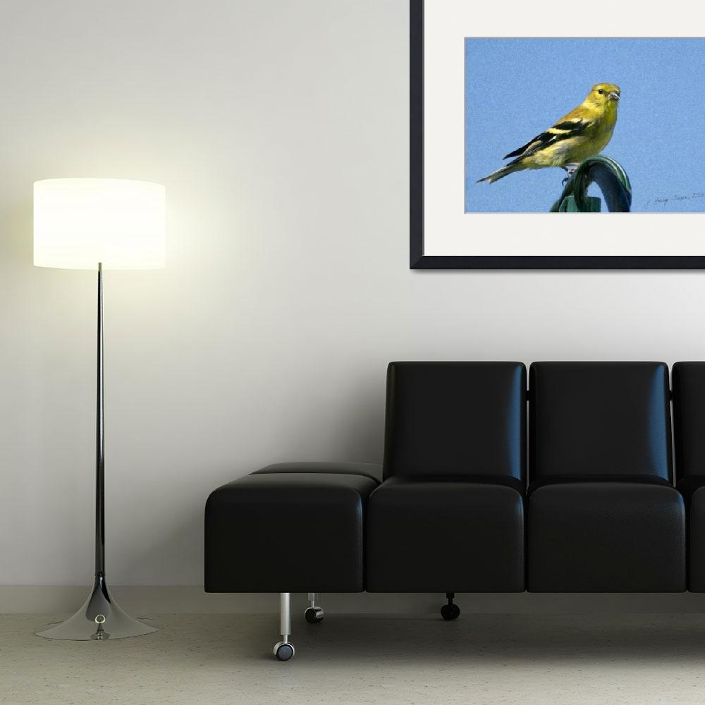 """Goldfinch&quot  (2008) by PhotographyofGrace"