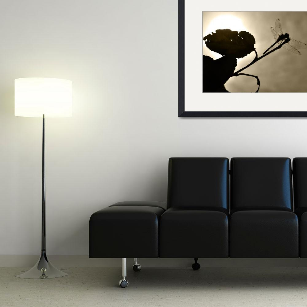 """Dragonfly Silhouette&quot  (2011) by LJdesigns"