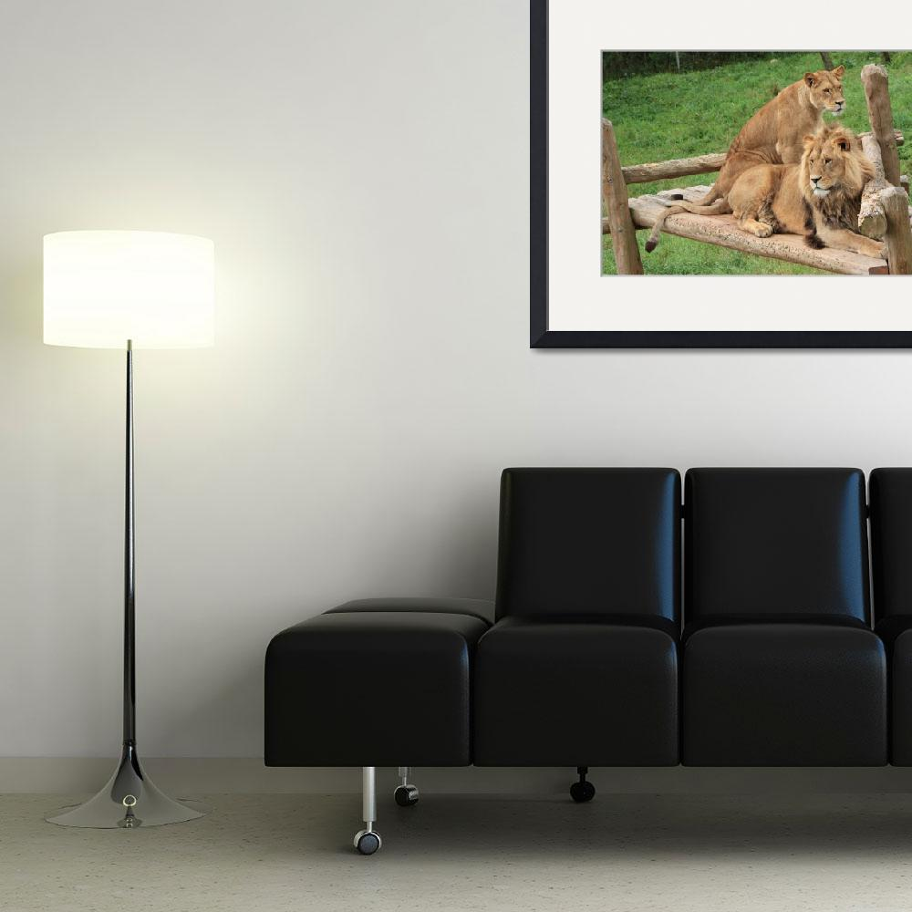 """Tail-crossed Lions&quot  (2010) by Albertphoto"