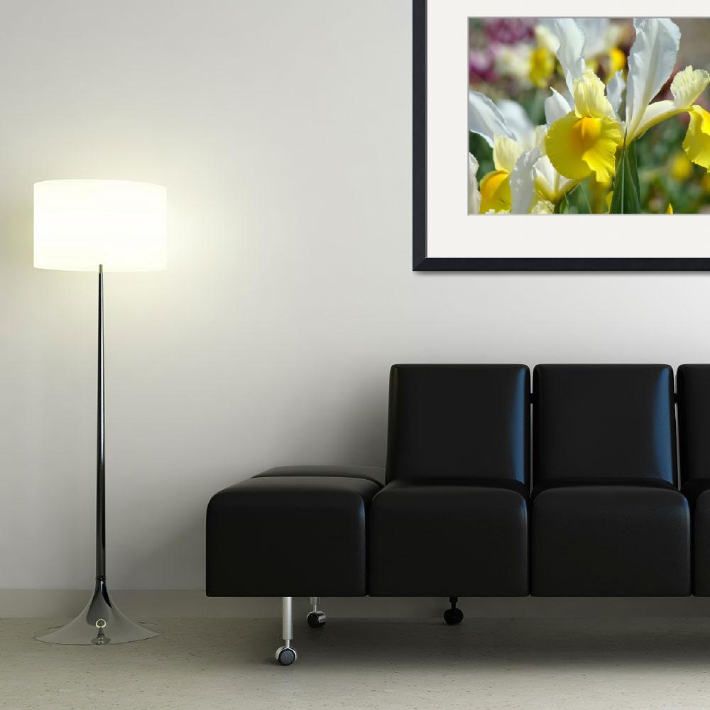 """Iris Flowers Yellow Irises 1 Art Prints Canvas Art&quot  (2009) by BasleeTroutman"