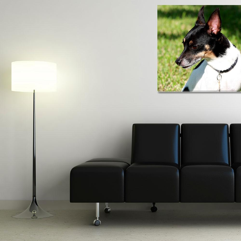 """Rat Terrier 0920&quot  (2009) by rayjacque"