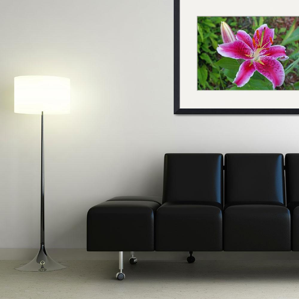 """Pink Day Lily&quot  (2008) by LHPhotography"