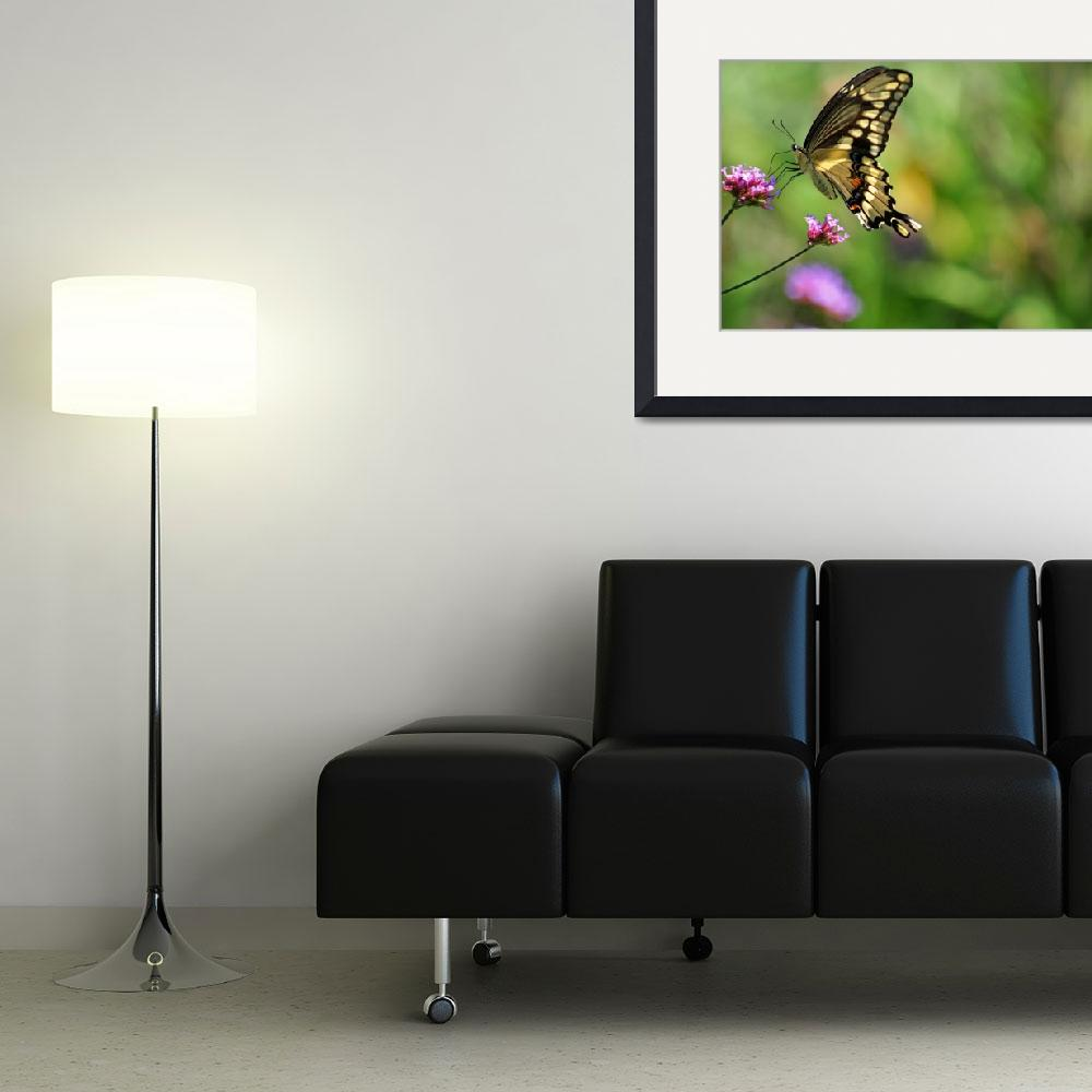 """Butterfly  Giant Swallowtail&quot  (2012) by KsWorldArt"