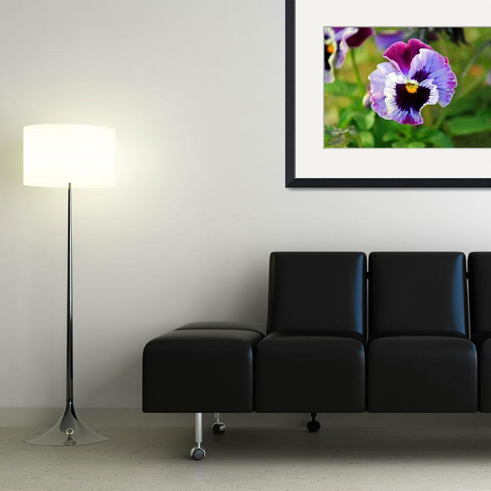"""Pansy Flower Close-up&quot  (2012) by KsWorldArt"