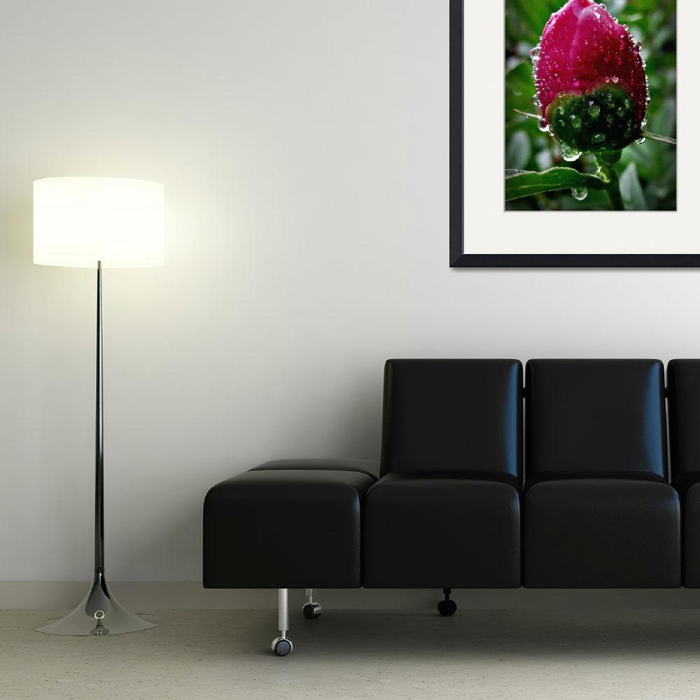 """Peony ll&quot  (2010) by bavosiphotoart"