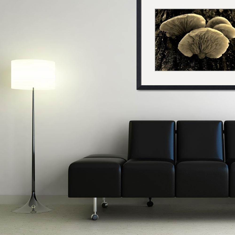 """Fungus ll&quot  (2009) by bavosiphotoart"