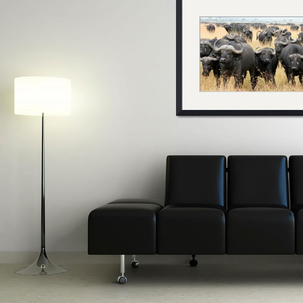 """African buffaloes in defensive stance, Masai Mara&quot  (2007) by marlenefrancia"