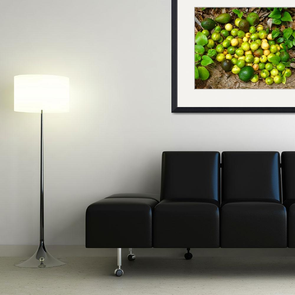 """Foraged Tropical Fruits&quot  (2012) by joeyartist"