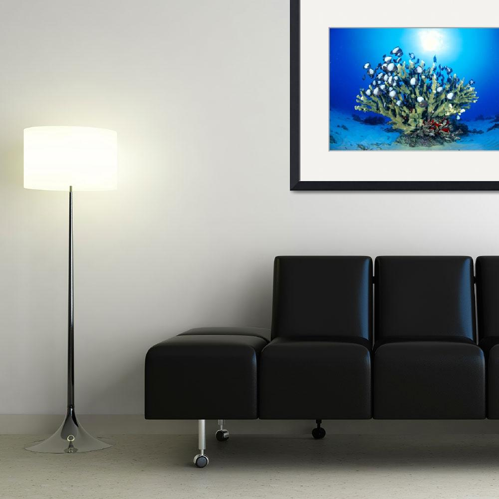 """Hawaiian Reef Scene With Antler Coral And Reef Fis&quot  by DesignPics"