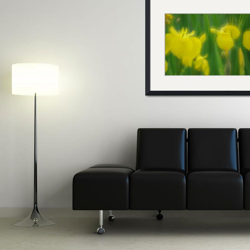 """Yellow Iris Double&quot  (2011) by kendietz"