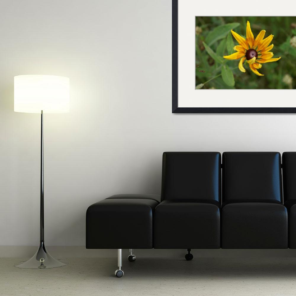 """Black Eyed Susan&quot  (2008) by LHPhotography"